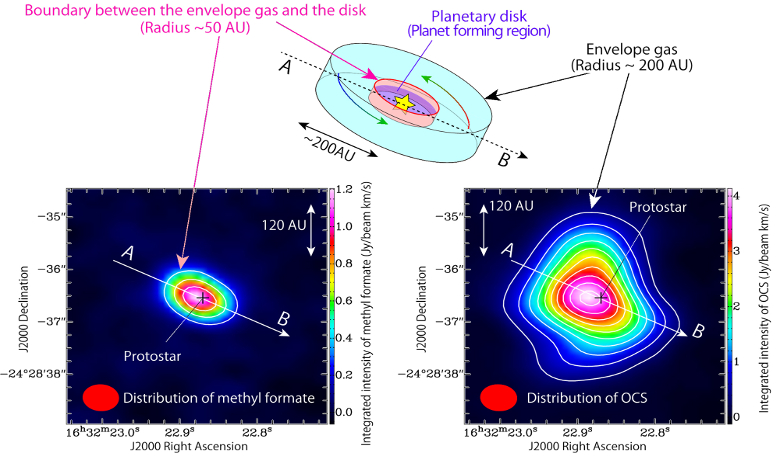 (Upper panel) A schematic illustration of the infalling gas around the protostar. (Lower left) Intensity distribution of methyl formate (HCOOCH3) and (lower right) intensity distribution of OCS (carbonyl sulphide), both observed with ALMA. Image: ALMA (