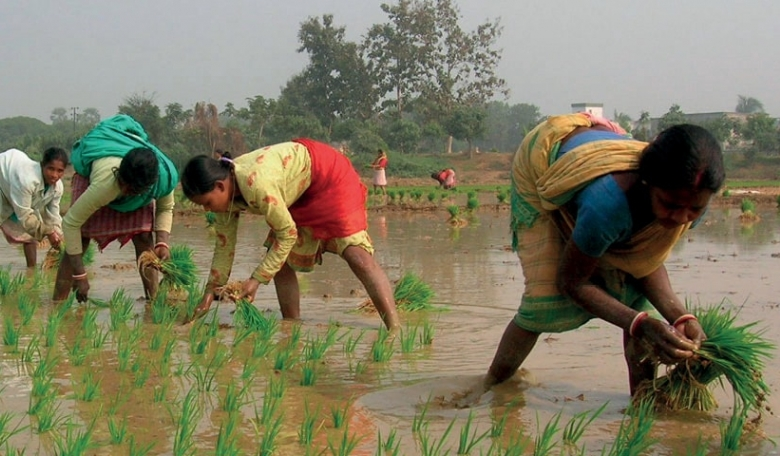 Women farmers in India planting rice.