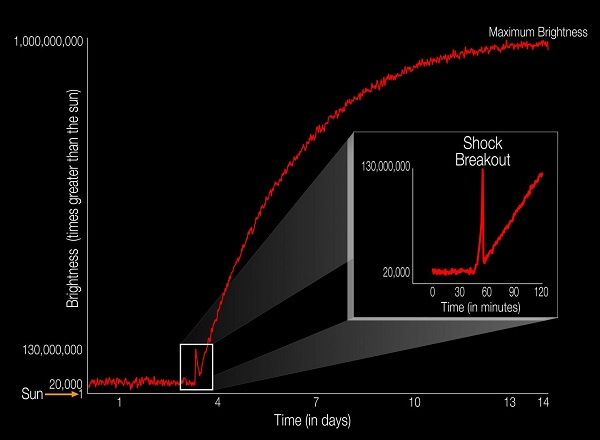 The diagram illustrates the brightness of a supernova event relative to the sun as the supernova unfolds over time. For the first time, a supernova shock wave, or shock breakout, has been observed in visible light wavelengths as it reached the surface of the star from deep within the star's core. The explosive death of this star, called KSN 2011d, reached its maximum brightness in about 14 days. The shock breakout itself lasted only about 20 minutes (see inset). Image credit: NASA Ames/W. Stenzel