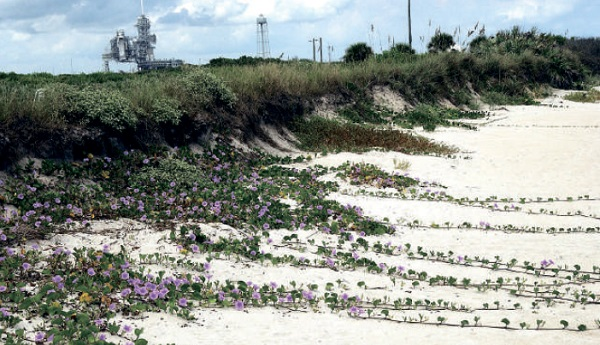 Preserving nature, like these purple flowers near Kennedy Space Center, is part of the green cosmonautics ideology